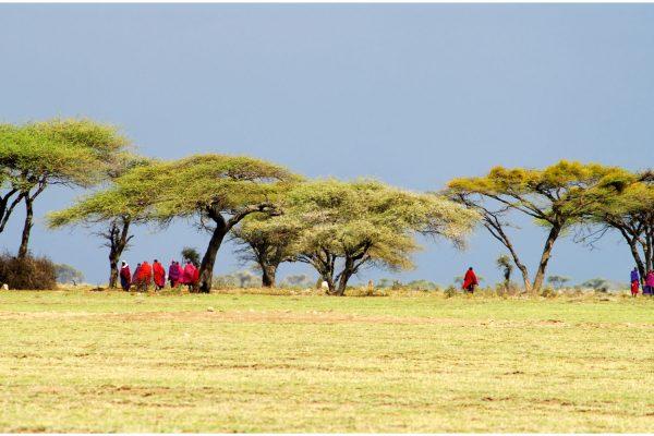 Africa.Tanzania.Masais.Acacias